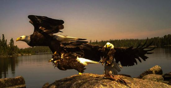 Red Lake, Canadá: Eagles