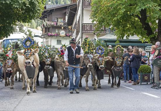 Alpendomizil Neuhaus: Hotel cattle
