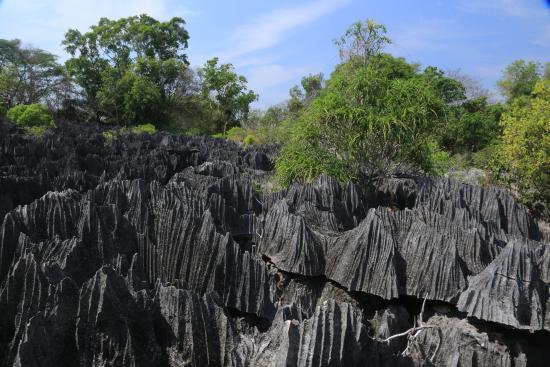 Tsingy de Bemaraha Strict Nature Reserve: Small tsingy