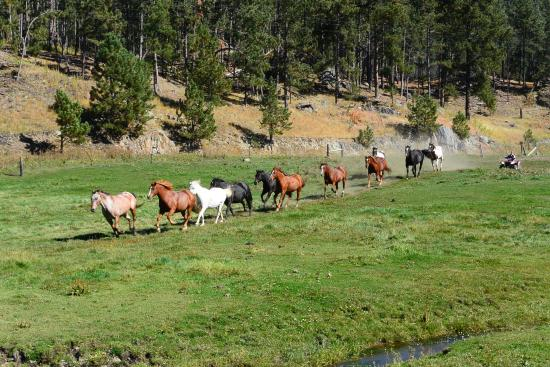 Corraling the horses at High Country Guest Ranch (a beautiful and moving sight to see!)
