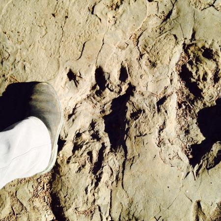 Trend Mountain Hotel & Conference Centre: Dinosaur footprint