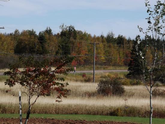Malden, Canadá: Southern meadows