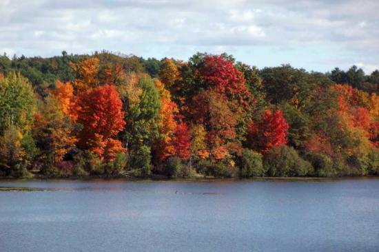 Chatham, estado de Nueva York: Fabulous Fall Foliage!