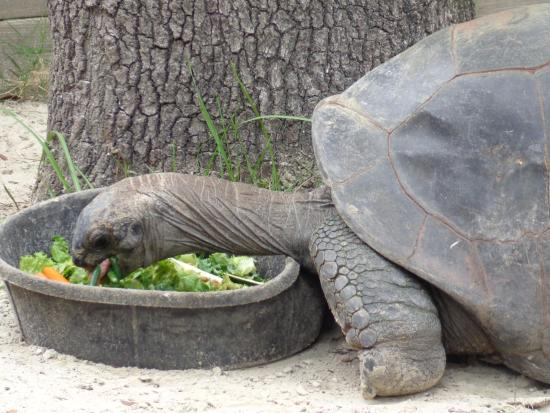 Lunch Time Picture Of Central Florida Zoo Botanical Gardens Sanford Tripadvisor