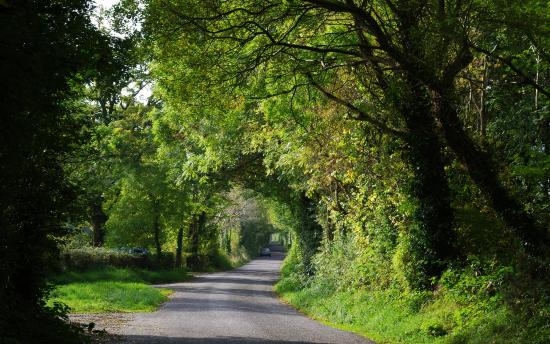 The Gearagh: Lovely lanes around the lake