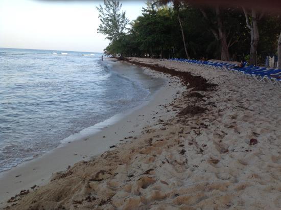 Seaweed on beach - Picture of Savannah Beach Hotel, Hastings