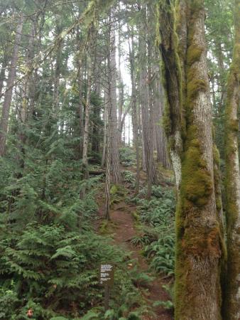 Nanaimo, Canadá: The rainforest West Coast Style