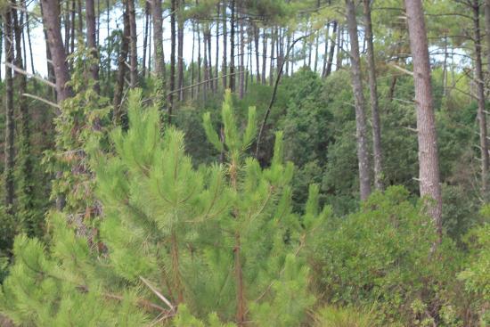 La Maison de la Prade : Surrounding forest