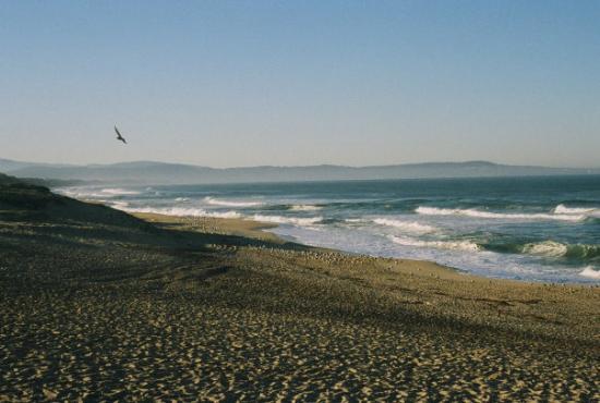 Marina Beach Site Of Two White Shark S Ca