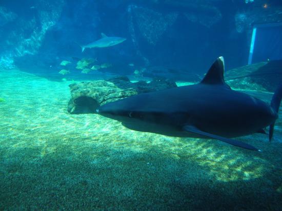 Picture Of Ushaka Sea World Aquarium Durban