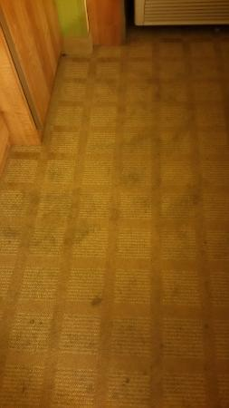 Microtel Inn & Suites by Wyndham Enola/Harrisburg: These rugs are atrocious!