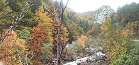 Provincia de Huesca, España: Selva de Oza