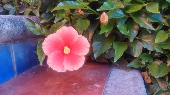 Hotel Angel Inn: Hermosas flores adornan el hotel