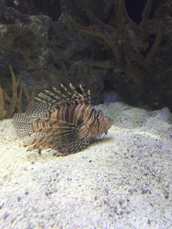 Around The Aquarium Picture Of Mandalay Bay Aquarium