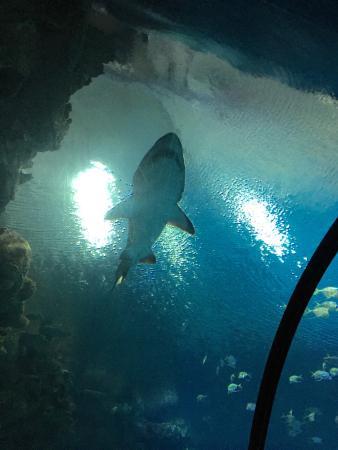 Aquarium Picture Of Mandalay Bay Aquarium Las Vegas
