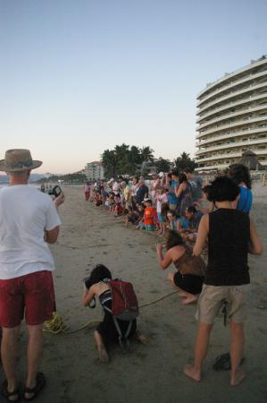 Sea Turtle Camp: Probably 30 people lined up, each with a turtle to release.