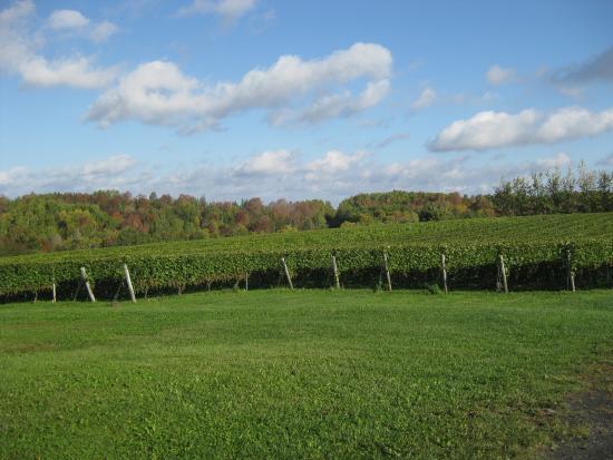 Newport Landing, Канада: Avondale Sky Winery oct. 2015
