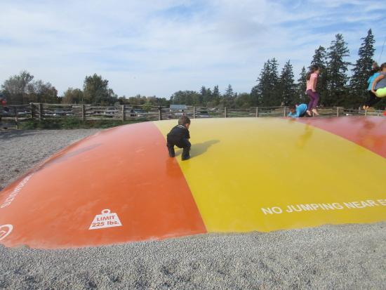 Ayr, Canada : Huge bounce area for kids