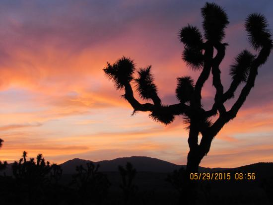 Sunset Is Amazing Here Picture Of Joshua Tree National