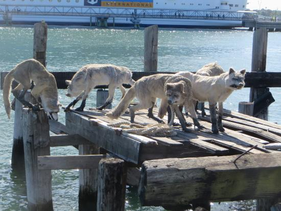 Portland, ME: Display of wolves along Eastern Promenade