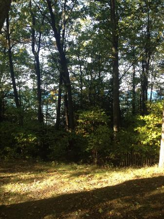 Eastport, MI: View from our camper-just beyond the trees is the beach!