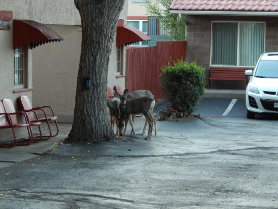 Dillon Motel: George's deer!