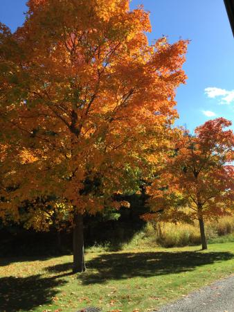 Mountainville, Nowy Jork: Fall trees on the grounds
