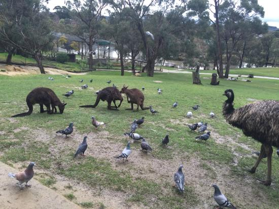 images ballarat wildlife - photo #15