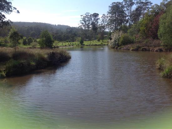 The Tasmanian Arboretum: photo1.jpg