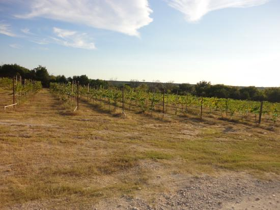 Bluff Dale Vineyards: The Vineyards pruned back for Fall