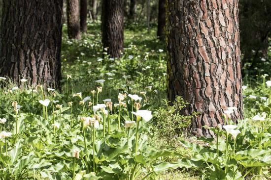 Ludlow Tuart Forest: Tuart