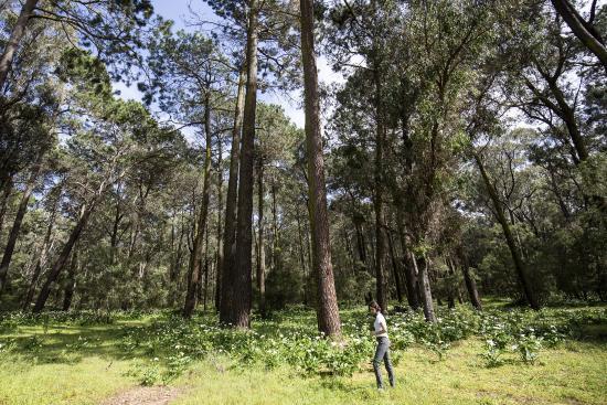 Ludlow Tuart Forest