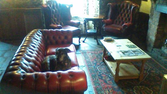 Crosby on Eden, UK: Doggie VIP Friendly