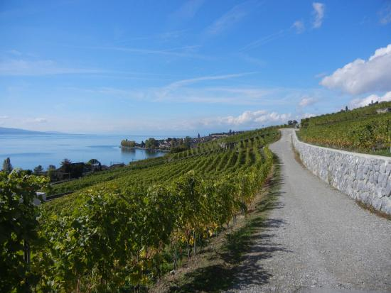 Lutry, Sveits: Vineyard with Lake Geneva View