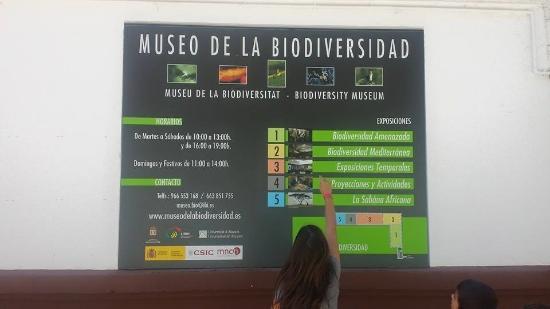 Ibi, Spania: Entrada Museo