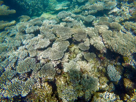 Picture of ningaloo reef dive coral bay - Ningaloo reef dive ...