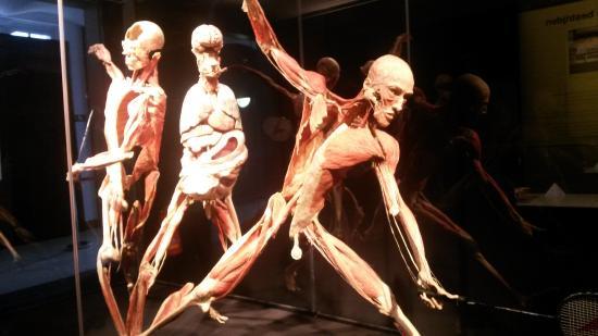 Gunther von Hagens' Body Worlds