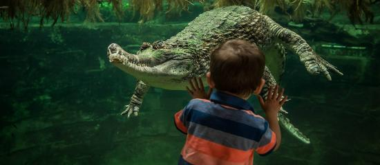 Sunda gharial crocodile at Chester Zoo