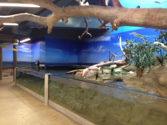 Aquarium Texas Picture Of Texas State Aquarium Corpus