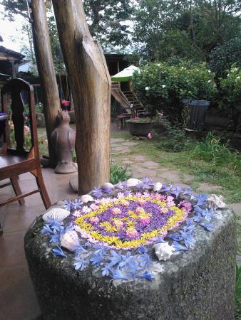 Las Flores de Eloísa - Picture of El Jardin de Celeste, Concepcion ...