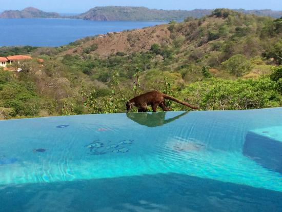Villa Durazno: Early morning visitor to the infinity pool