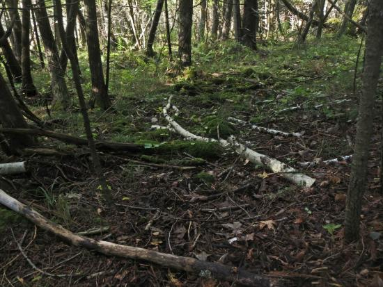 Thorne Swift Nature Preserve: Forest Floor