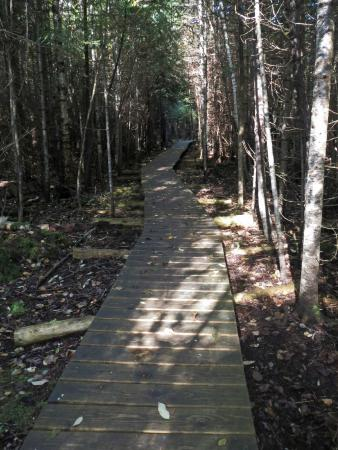 Harbor Springs, MI: Trail (Handical Accessable)
