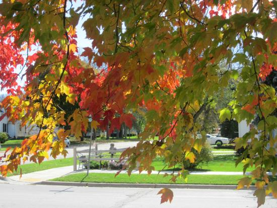 Anna V's Bed and Breakfast: Maple Trees at Anna V's