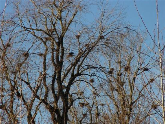 Great Blue Heron Nature Reserve: 150 heron nests
