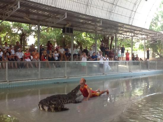 Шоу с крокодилами - Picture of Million Years Stone Park & Pattaya Crocodi...