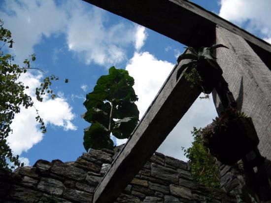 Wayne, Pensilvania: ruins view
