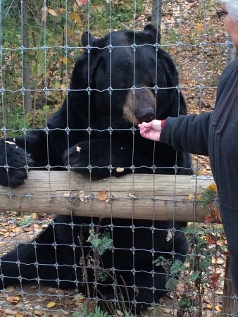 Ely, MN: North American Bear Center