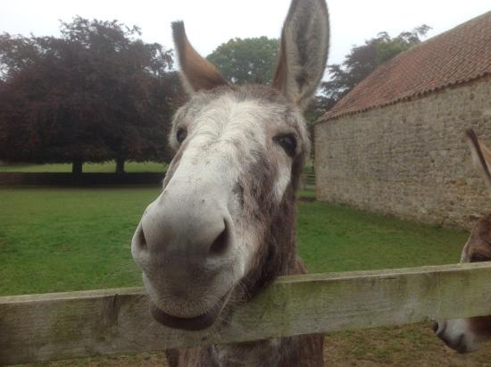 Holme Grange Farm: One of Elaine's donkeys