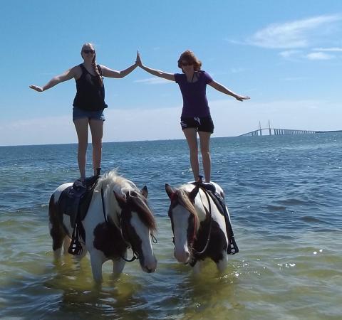 C Ponies Beach Horses Horseback Riding By Skyway Bridge St Pete